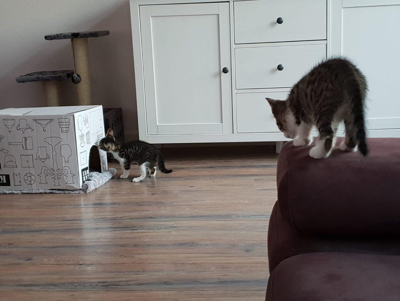 Ze zijn er, onze katten!
