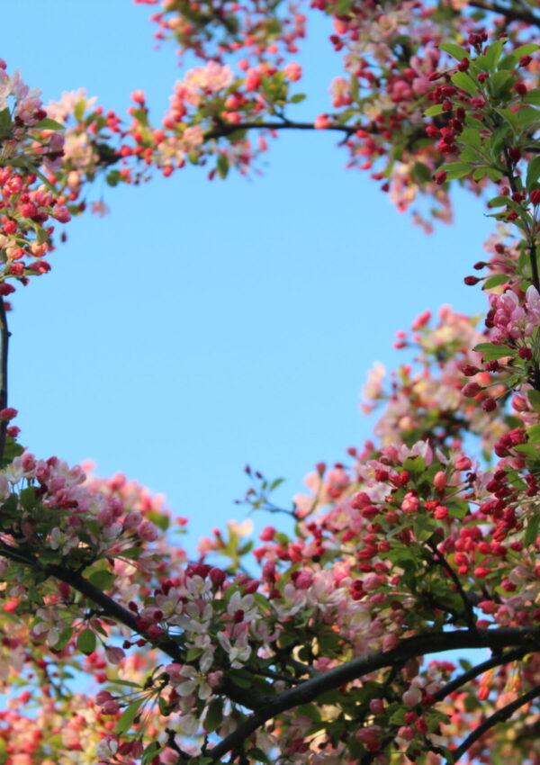 Gek op lente en mooi weer! 7 redenen waarom